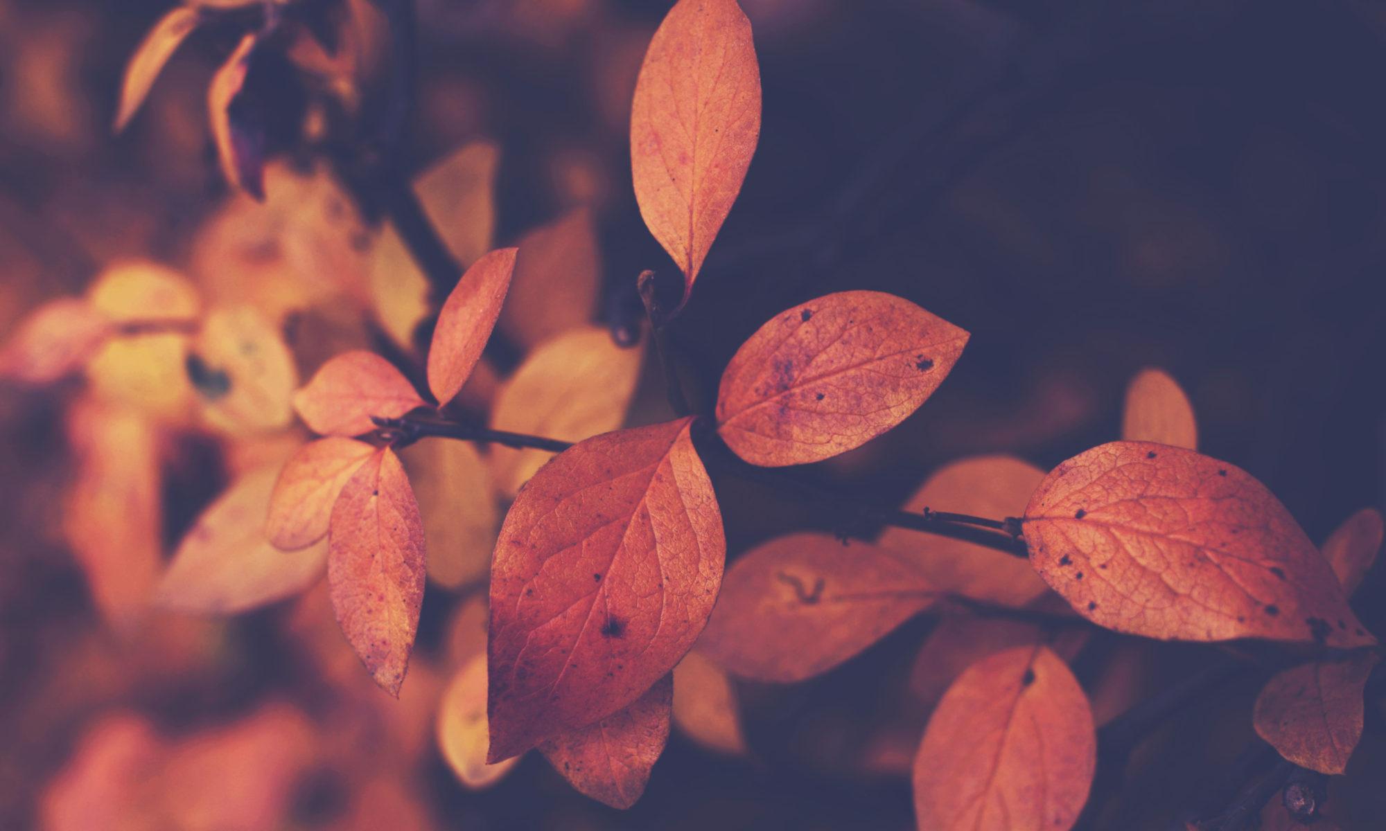 Jesienne liście na ciemnym tle